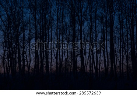 Sunset in the woods autumn forest,path through a fall forest. - stock photo