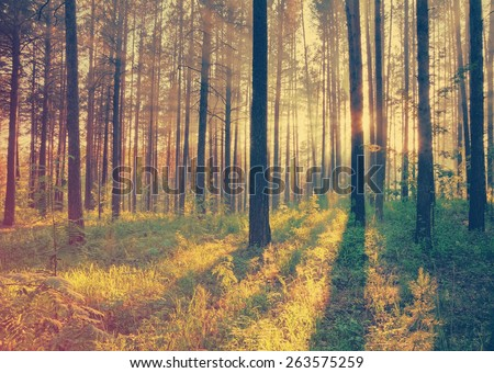 sunset in the woods, retro film filtered, instagram style  - stock photo