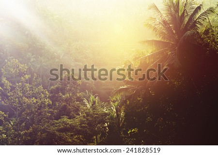 Sunset in Tropical Rainforest, Bali landscape, Ubud, Indonesia - stock photo