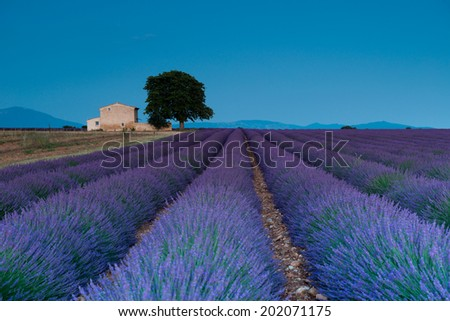 Sunset in Valensole.Provence, France. - stock photo