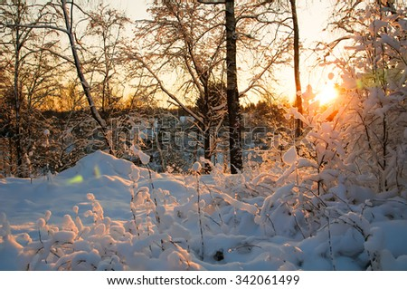 Sunset in winter. Hoarfrost on branches macro. Hoarfrost and Rime on trees. Frost and snow on the branches. Beautiful winter nature. Winter rural landscape. New year's fairy tale.in snow. - stock photo