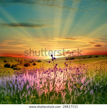 sunset is in the field - stock photo