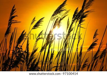 Sunset Lake Plant in yellow - stock photo