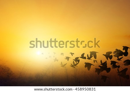 sunset landscape and birds silhouettes flying sunset sky go home