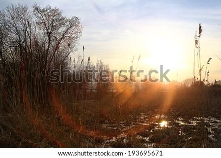 sunset landscape of dry grass - stock photo