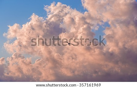 sunset landscape, seagull flying through the clouds. - stock photo