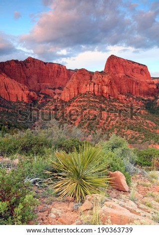 Sunset landscape with a yucca plant, Zion National Park, Utah, USA. - stock photo