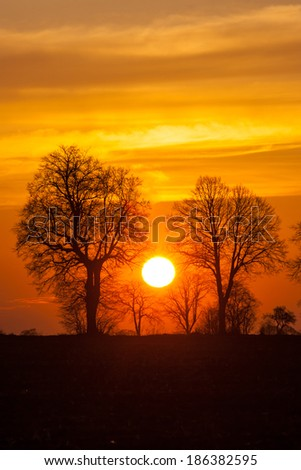sunset landscape with orange sky and withered trees