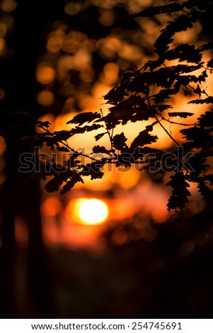 Sunset light in the oak forest - stock photo