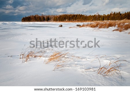 Sunset light on marsh grasses along the frozen shore of Weborg Marsh, Peninsula State Park, Door County, Wisconsin. - stock photo