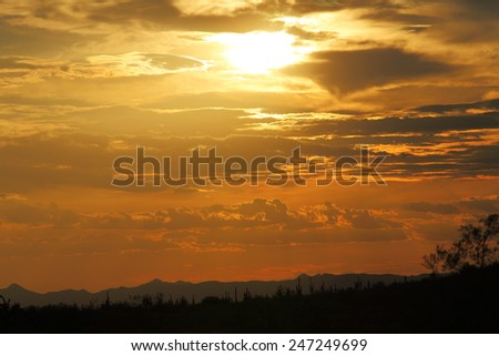 Sunset light with clouds and silhouette of saguaro cacti from the desert Southwest - stock photo