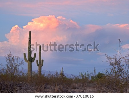 Sunset lit red clouds, and Saguaros.