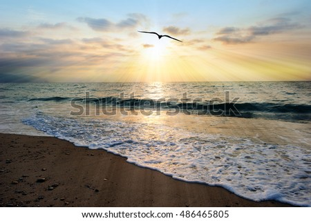 Sunset ocean bird is an ethereal ocean scenic with sun rays bursting forth from the setting sun as a gentle wave rolls to shore.
