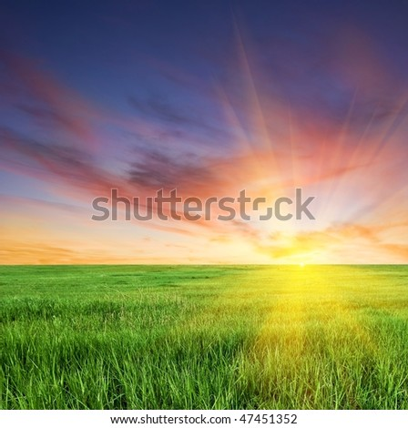 sunset on a boundless fields
