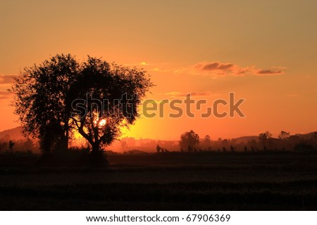 Sunset on a Meadow