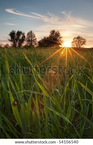 Sunset on a spring meadow - stock photo