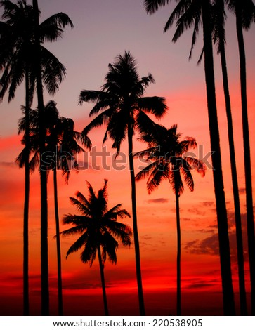 Sunset on a tropical Island.