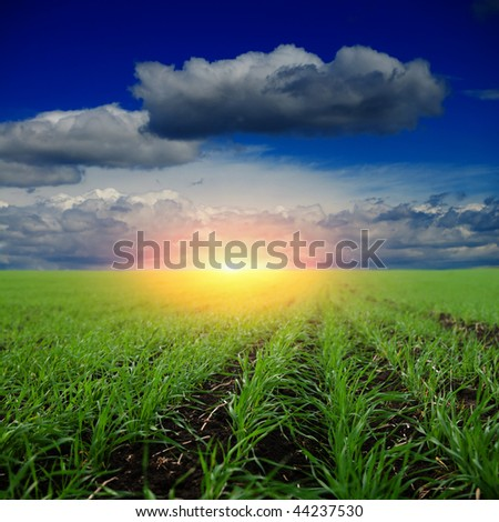sunset on field at spring