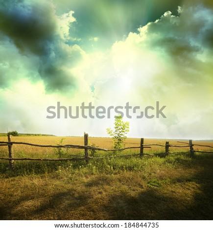 sunset on field at summer  - stock photo