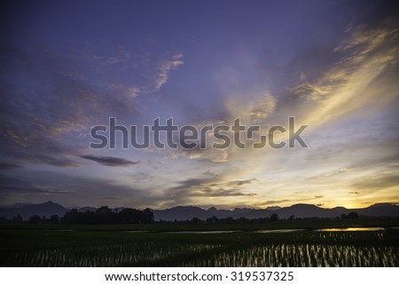 Sunset on green rice farm