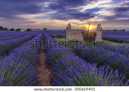 Sunset on lavender field behind a ruined hut with a tree, France