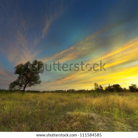 Sunset on meadow and lonely tree - stock photo