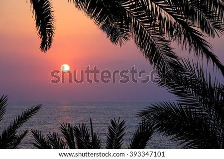 Sunset on sea through palm branches - stock photo