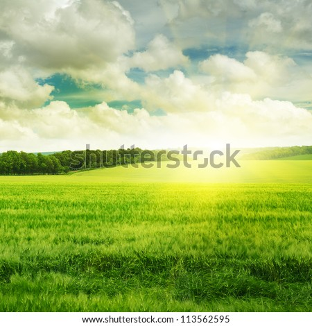 sunset on spring field - stock photo