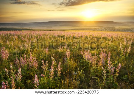 sunset on summer mountain meadow. Nature composition. - stock photo