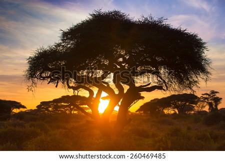 Sunset on the african savannah - stock photo