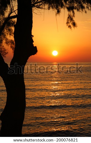 Sunset on the beach with dark tree silhouette