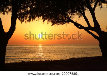 Sunset on the beach with dark trees silhouettes