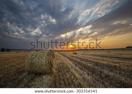 sunset on the field in the straw