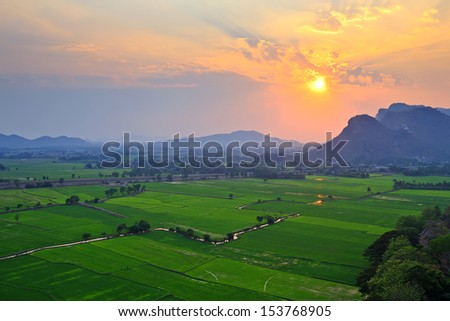 Sunset on the rice fields. - stock photo
