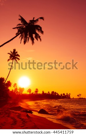 Sunset on tropical beach with big sun circle over the horizon and palm trees silhouettes - stock photo