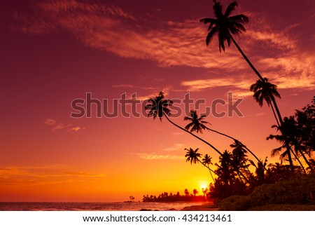 Sunset on tropical beach with palm trees silhouettes - stock photo