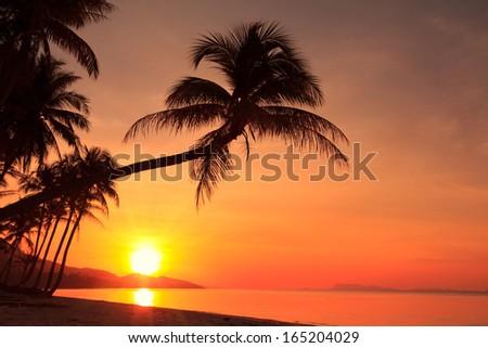 Sunset on tropical island - stock photo