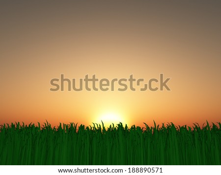 Sunset or sunrise over grass landscape