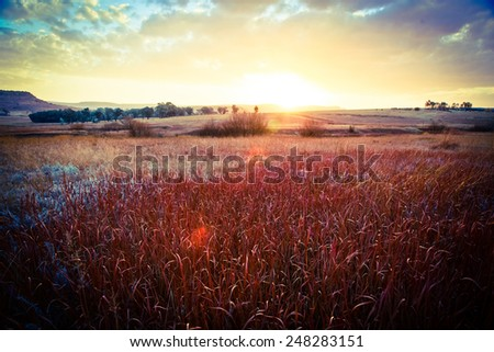 Sunset over a field - stock photo