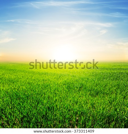 sunset over a green rural fields