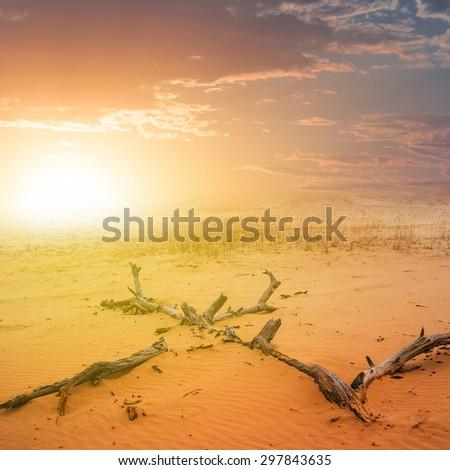 sunset over a sand desert - stock photo