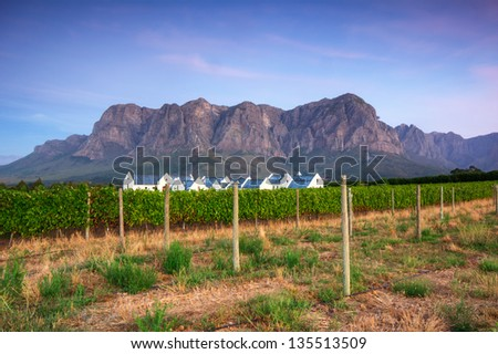 Sunset over a vineyard with Table Mountain in the background, Stellenbosch, Cape Winelands, Western Cape, South Africa - stock photo