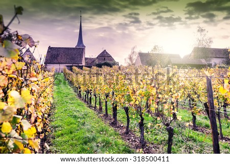 Sunset over autumn vineyards of wine route. France, Alsace - stock photo