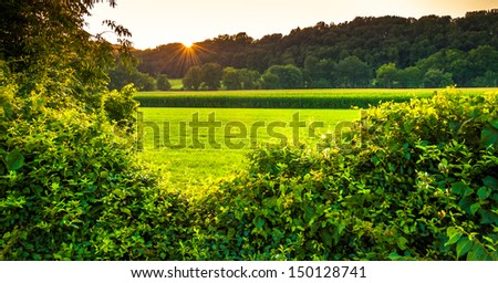 Sunset over bushes and a farm field in Southern York County, Pennsylvania. - stock photo