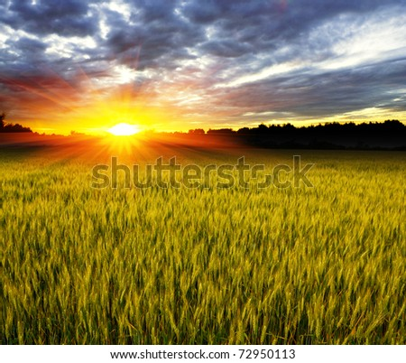 Sunset over crop field - stock photo