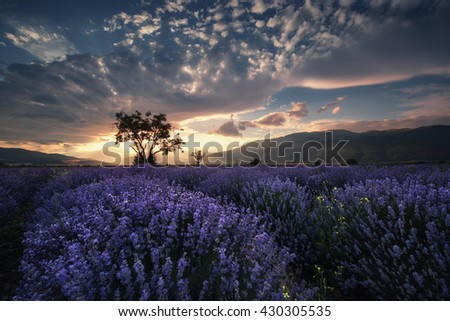 Sunset over dream lavender field in Bulgaria with beautiful light and clouds  - stock photo