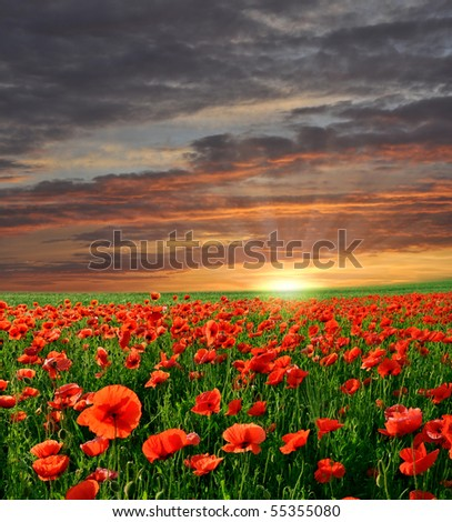 Sunset over field with Red poppies - stock photo