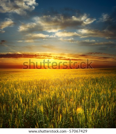 Sunset over field with wheat - stock photo