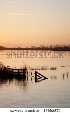 Sunset over flooded wetlands in England with silhouettes, ducks and trees with room for your text