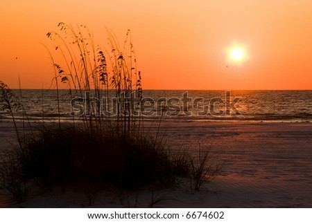 Sunset over Florida Gulf Coast beach with Sea Oats(natures erosion defense) in foreground - stock photo